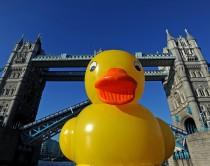 Duck_LONDON_5